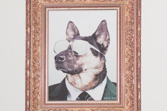 fashion accessories eyewear cloth dog 3