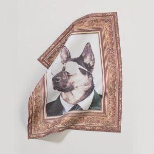 fashion accessories eyewear cloth dog 2